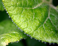 close up image of green foliage with hanging dew drops.