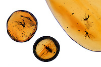 AMBER<br />