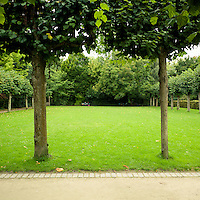Two trees standing parallel with a bench in the bacground