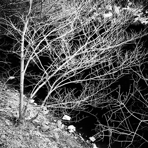 Tree on Black, Ladybower Resevoir, Sheffield