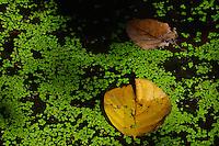 A pond at the Polonnaruwa-Mediaeval Capital City, Sri Lanka