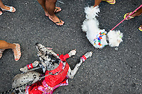 Disguised dogs take part in the Blocao pet carnival show at Copacabana beach in Rio de Janeiro, Brazil, 12 February 2012.