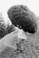 Switzerland. Canton Nidwald. Oberalp. 1500 meters high. Engelberg valley. Hay harvest. A man carries a haystack wrapped in a net on his head and back. Manual labor. Labour force. Swiss alpine farmers. Alps mountains peasants. © 1996 Didier Ruef