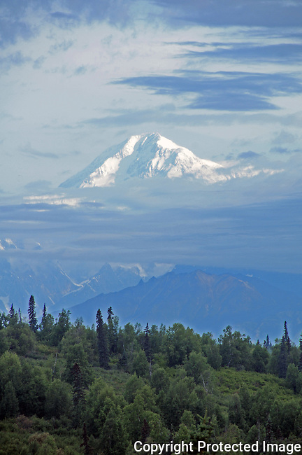 Mt McKinley peeks out of the clouds on an August morning.  It's the highest peak in north America and sits in Denali National Park, Alaska