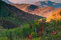 2012 Utah Fall colors along the Wasatch Front in Utah.  The Wasatch Mountains are on fire with color in the Fall.