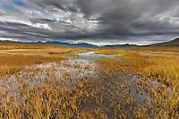 Tundra wetlands on the south side of the Alaska range mountains, interior, Alaska.