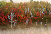 red, white, yellow and green trees at dawn during the fall