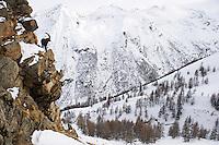 29.11.2008.Alpine Ibex (Capra ibex) in alpine landscape..Gran Paradiso National Park, Italy