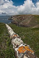 Europe/France/Bretagne/56/Morbihan/ Belle-Ile-en-Mer/Locmaria: Muret et Côte Rocheuse à la Pointe du Skeul
