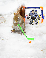 "BNPS.co.uk (01202 558833).Pic: NancyRose/BNPS..***Please Use full byline***..A group of wild squirrels have been snapped posing with human objects for a hilarious set of adorable photographs...Nancy Rose, 58, was inspired to take the quirky images when she spotted a squirrel sitting on top of a pumpkin she had left in her garden...She began building her own 'props' for the creatures to interact with, and left miniature items outside surrounded by nuts on her garden decking to entice them closer...She created a tiny washing machine, tumble dryer, hats, coats, musical instruments, easel and paint pallette, a boat and a fire place and waited for the animals to visit...The inquisitive squirrels have gradually learnt that they find nuts if they pick up or look inside the items, and have started frequenting the garden more often...Nancy patiently waits with her camera and takes more than 100 frames of each squirrel as they move incredibly fast...Nancy, a school counsellor from Nova Scotia in Canada said: ""My squirrel pictures started almost by accident."