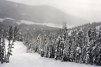 A view of ski runs and trees at Showdown Ski Area on King's Hill in the Little Belt Mountains near Neihart, Montana, USA.