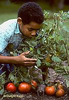 1R14-013z  Eastern Box Turtle - being watched by boy in garden near tomato plants - Terrapene carolina