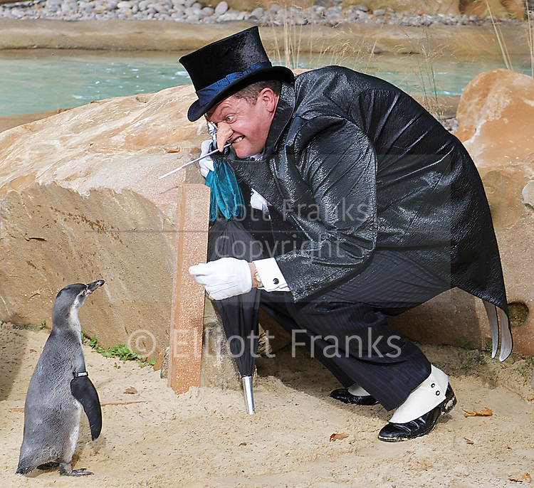 The Penguin from Batman Live meets Penguins from London Zoo<br />