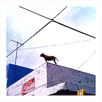 Watch Dog. Tlaquepaque, Mexico. 4/18/09 (iPhone image)