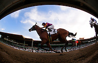 Ellafitz, with jockey Martin Garcia aboard wins the 2012 Santa Maria Stakes at Santa Anita Park in Arcadia California on February 18, 2012.