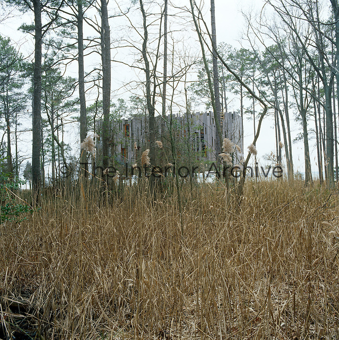 The wood cladding on the exterior of the house echoes its surroundings