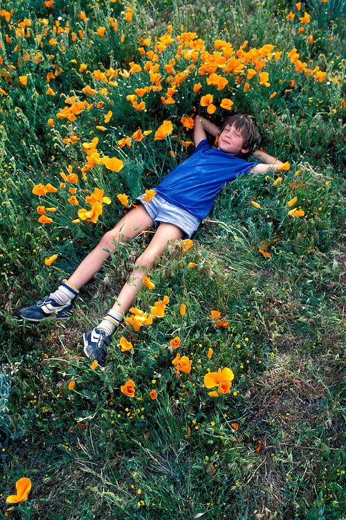 California: Desert. Boy in poppies. Model released. Photo caanza104..Photo copyright Lee Foster, 510/549-2202,  lee@fostertravel.com, www.fostertravel.com