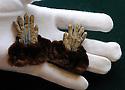 UK. Dent's Glove Museum.