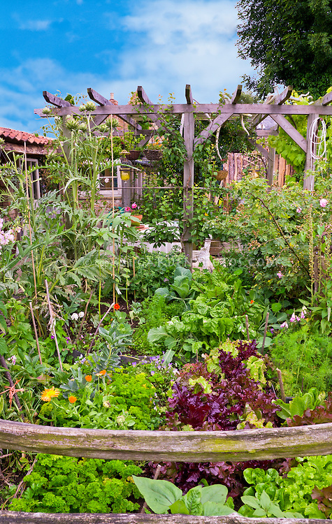 Vegetable garden with flowers, red lettuce, artichokes, trellis, brick house, mixture of plants, blue sky, sunny day