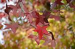 Autumn foliage at Don Castro Regional Recreation  Area