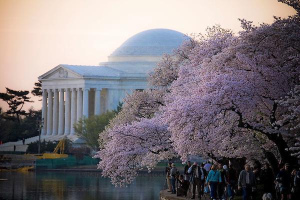 Jefferson Memorial Cherry Blossoms Tidal Basin Washington DC