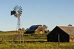 Old wooden barns on cattle  ranch, green grass, oaks, spring. 1890s open-backgear Aermotor windmill, Salt Spring Valley, Calif