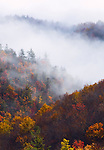 Autumn forest and clearing storm, Unaka Mountains