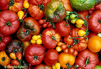 HS09-030x  Tomato - striped German, Prudens purple, Cherokee purple, Moskvich, red and yellow pear, brandywine, giant past varieties