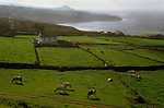 Dairy cattle graze in a field on Terceira, Azores. Far out in the Atlantic Ocean, some 850 miles off the western coast of Lisbon, Portugal lies the 425-mile long archipelago of the Azores. (Jim Bryant Photo).....