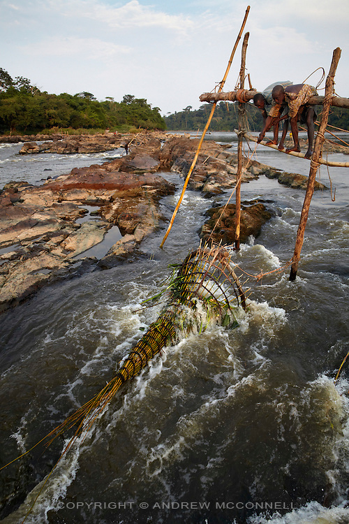 Fishermen check a basket at Bamanga on the Lualaba River (Upper Congo River), 100km upstream from Kisangani on the Boyoma Falls, DR Congo. Bamanga is the second cataract on Boyoma Falls (known as Wagenia Falls by the local tribe of the same name) which consists of seven cataracts spread over 100km with the river dropping 60 meters to the last cataract at Kisangani.