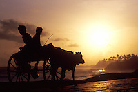 Sri Lanka. South Coast, two boys on a bullock cart.
