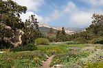 A view of flowerbeds and the mountains from the Santa Barbara Botanic Garden; Santa Barbara; Santa Barbara County; California; CA; USA