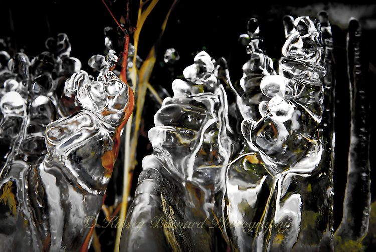 &quot;ICE PUPPETS&quot;<br /> <br /> Ice crystals hanging from dried grass strands a long a creek bed create a natural abstract delight. Look at it long enough and you will discover many different and interesting creatures.