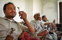 A former resident of the UK chewing qat with friends from the USA who are visiting the family home in the town of Melah. Many Yemeni men sit and consume this narcotic plant for several hours a day, chewing the leaves to a pulp stored in the cheek like a golf ball.