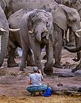 Art Wolfe photographs African elephant herd, Okavango Delta, Botswana