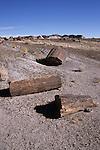 Petrified logs, Petrified Forest National Park, Arizona