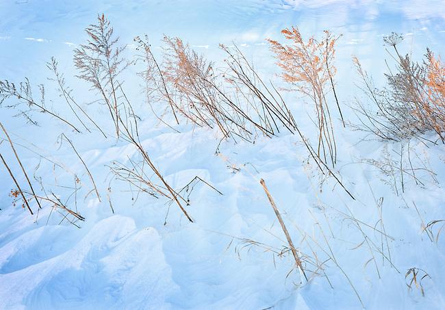 Winter Field Abstract, Spokane, Washington