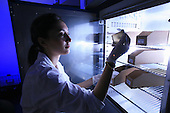 Scientist with insect larvae (Fly) being cultured in an incubator in study of life cycle during forensic research