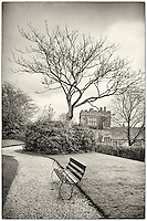 Bench and tree in the garden at Cotehele (National Trust)