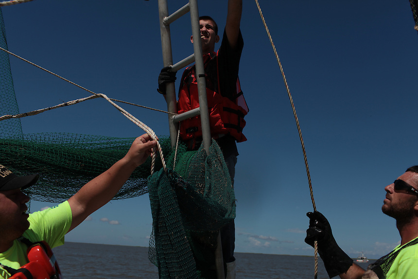 Eric Melerine, Mikey Labat and his brother Allen Labat pulling in hard boom around Pelican Island from Delacroix Island, LA August 30, 2010.