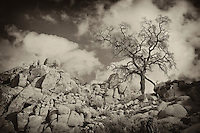 Desert Oak Large Rock Hill Wide View - Sepia Black & White