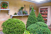 Shrubs evergreen conifers next to house wall with antique vintage finds and old pots for charming whimsical and cute style of design, recycled, recycling and upcycling
