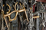 Close-up of horse bridles hanging, Bahia, Brazil