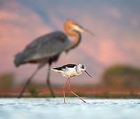 South Africa 2016 Birds