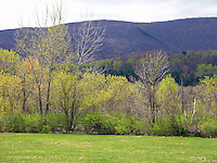 Berkshire Mountains in Spring