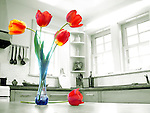 At side, four colorful red and yellow tulips in a clear, blue glass vase, with one tulip resting on table, in bright, monochromatic, slightly green-tinted, traditional kitchen lit by sun light streaming in through windows; selective coloring.