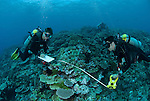 Craig Humphrey and Katharina Fabricius conducting reef survey