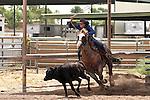 Horse-Jaycee