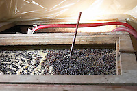 pinot noir fermenting must and grapes with thermometer  nuits-st-georges cote de nuits burgundy france