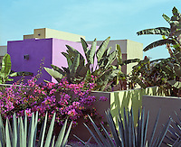 The exterior walls of the hotel are painted deep purple and grey forming a stunning backdrop for some exotic garden plants and bougainvillea